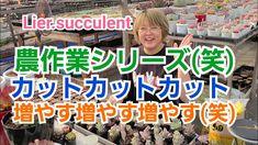 【多肉植物】農作業シリーズ(笑) カット✂️カット✂️カット✂️ 増やす増やす増やす‼️ - YouTube Succulent Care, Succulents, Youtube, Succulent Plants, Youtubers, Youtube Movies
