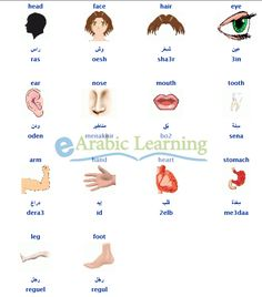 body parts in  #egyptian #Arabic                              …