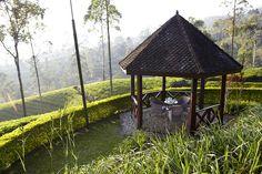 House & Garden UK finds paradise at Tea Trails
