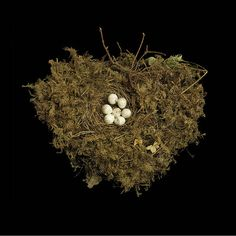 Tennessee Warbler's Nest. It's heart shaped!