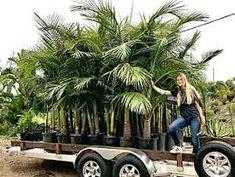 Image result for palms nursery