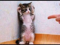 Haut les mains !!!🔫🔫🔫
