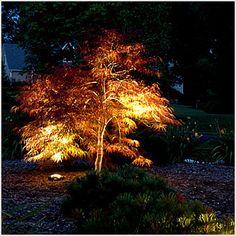 led landscape lighting - Google Search