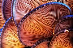 Inspiration of close ups of organic things that look abstracted- Close-up.Mushroom fins