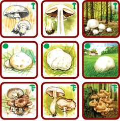 Forest Theme, Diy Toys, Montessori, Teacher, Therapy, Animales, Parenting, Homemade Toys