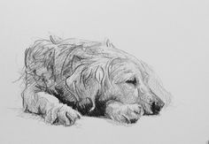 Day #57 - Graphite on card by Lucy Wilson, New Zealand…
