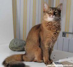 Tuxedo Cats chats Savannah, Cat and Wildlife