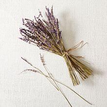 Decorative Botanical Accent Decors   west elm