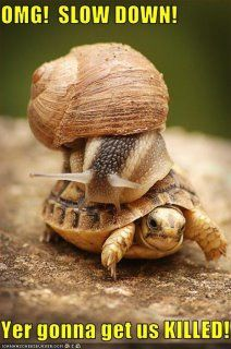 Slow and steady wins the race!!!!