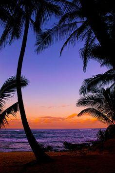 "This is how I imagine sunset in San Loretta Island appears. (Silhouetted palm trees - tropical beach sunset - Maui (by IronRodArt - Royce Bair (""Star Shooter"")) The Beach, Sunset Beach, Maui Beach, Purple Sunset, Beautiful Sunset, Beautiful Beaches, Beautiful Scenery, Animals Beautiful, Beautiful Pictures"