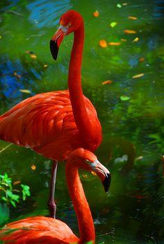 Flamingo - ©Jeny's flickr page - www.flickr.com/photos/jenyplante/3330867116/