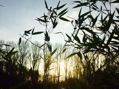 #sunset #sun #enjoy #rheidt