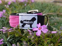 Click Eco-Dog Collar with Buckle, Simple, Handmade, Available in Different Sizes and Color, Made out of Webbing and Upcycled Fabric. Custom Dog Collars, Fox Terrier, Dog Friends, Making Out, Etsy Store, Your Dog, Upcycle, Etsy Seller, Beautiful Gifts