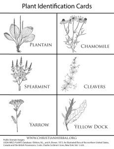 plant identification coloring pages - photo#5