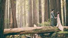 Amber + Mike // Redwoods in California on Vimeo - Everly Films - http://everlyfilms.com/amber-mike-redwoods-in-california/