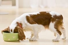 Kitchen Nightmare: Petplan pet insurance takes a look at dangerous foods for pets #dogs #cats #health