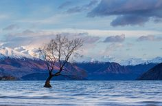 Lonely Tree in Lake Wanaka by Roaming the World, via Flickr
