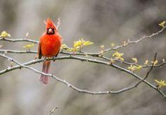 BIRD OF THE WEEK -- SWALLOW-TAILED HUMMINGBIRD -- PLANET EARTH BIRD WORLD group
