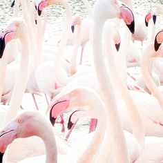 D R E A M  B I G // Be a flamingo in a flock of pigeons.