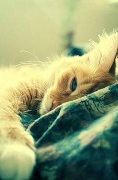 sleepy....