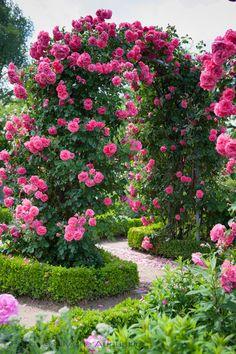 Garten by SiMone Augustin photo.nature - My site Beautiful Flowers Garden, Amazing Flowers, Beautiful Roses, Beautiful Gardens, Garden Paths, Garden Landscaping, Garden Beds, Climbing Roses, Flower Aesthetic
