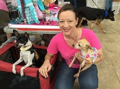 We have adoptable #GermanShepherds and #Chihuahuas at #ToyotaOfTampaBay at the JUST ONE DAY event.