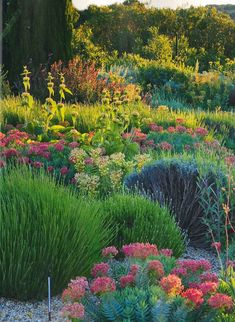 Garrigue Garden inspired by Beth Chatto, includes drought-tolerant Mediterranean species