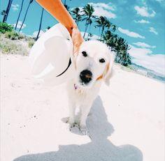 Imagem de dog, beach, and summer Cute Puppies, Dogs And Puppies, Cute Dogs, Doggies, Animals Beautiful, Cute Animals, Dog Beach, Cute Creatures, Animal Party