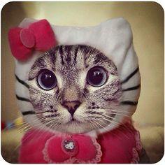 Disfraces Divertidos gato | PopSugar Tecnología