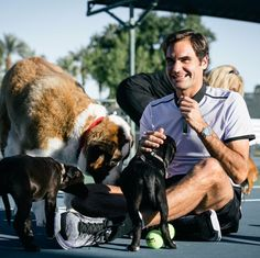 Goat and dogs, together at last!