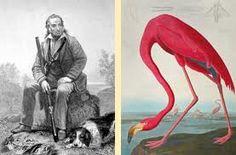 audubon prints birds - Google Search