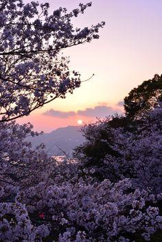 春の夕焼け | Nagasaki365 - 長崎の今を写真でお届けします。