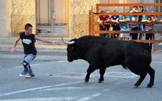 Santacara: Toropasion - Fiestas de Santa Eufemia (3) Cow, Animals, Saints, Youth, September, Parties, Animais, Animales, Animaux