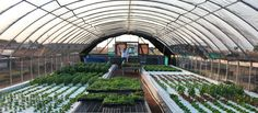 Commercial Aquaponics    I've been trying to compare the pros and cons of different types of aquaponic systems recently. Right now, ...