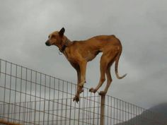 dog on top of a fence