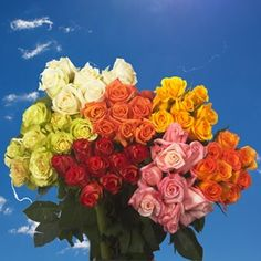 Wholesale Flowers 100 Roses 4 Bunches Different Colors 100 Roses, Best Roses, Mothers Day Roses, Buy Roses Online, Rose Delivery, Types Of Roses, Charro, Rose Arrangements, Rose Bouquet