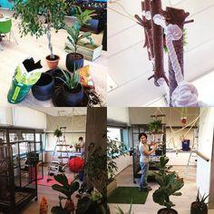 Grandes cambios para las guacas de #socialpoint! Nueva instalación para su bienestar! Y solo es el principio!  #loros #etologia