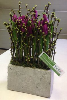 Parallel flower arrangement with purple tulips - Bellis Bloemen (Westvleteren)