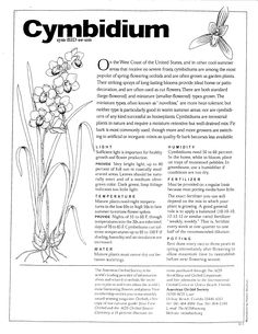On The Net Landscape Design And Style - The New On-line Tool That Designers Are Flocking To For Landscape Designs Cymbidiums Were The Orchids I Grew-Hardy And Love The Outdoor Life Here On California's Central Coast. Orchid Plant Care, Orchid Plants, All Plants, Garden Plants, Indoor Plants, House Plants, Orchids Garden, Orchid Flowers, Indoor Gardening