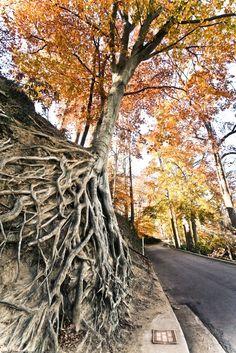 Resultado de imagem para Strange trees