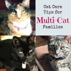 Cat care tips for multi-cat families #FreshandLight #sponsored