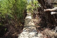 Blog on hiking the Mastic Trail in Grand Cayman