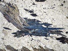 Glaucophane in PPL, in a metachert Mineralogy, Stones, Nature, Inspiration, Geology, Minerals, Rocks, Biblical Inspiration, Naturaleza