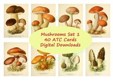 Mushrooms Set 1 - ATC CARDS - digital collage sheet 40 ATC cards - printable instant download