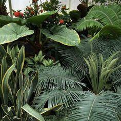 New plants hanging indoor vines 66 Ideas Fred Instagram, Disney Instagram, Tumblr Flower, Plants Are Friends, Plant Aesthetic, Green Plants, Botany, Mother Nature, Indoor Plants