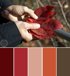 Fall for Autumn Color Palettes - Ty Pennington