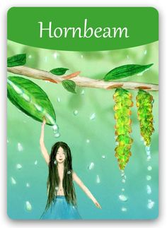 Bach Flower Cards [Hornbeam] - This Bach Flower Remedy is an effective treatment… Bach Flowers, Wild Flowers, Online Cards, Switch Words, Flowers Online, Oracle Cards, Medicinal Plants, Book Of Shadows, Flower Cards