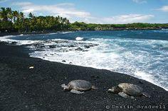 i wanna see Hawaiian Sea Turtles on Punaluu Black Sand Beach, Big Island, Hawaii