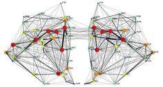 Lack of corpus callosum yields insights into autism — SFARI.org - Simons Foundation Autism Research Initiative