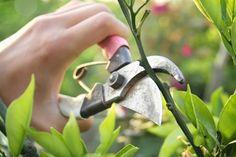 GIARDINAGGIO PRIMAVERILE, non farti trovare impreparata all'arrivo della primavera!